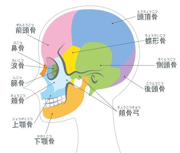 クラニアルセラピーで脳脊髄液の循環を改善!